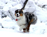 Mia in running in snow